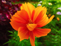 orangeade Lizenzfreie Stockbilder
