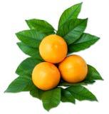 Orangen Stockfoto