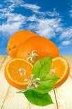 Orangen auf der Tabelle lizenzfreies stockbild