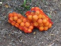 Orangen im Gitter Stockbilder