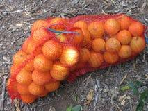 Orangen im Gitter Stockbild
