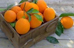 Orangen im Kasten stockbild