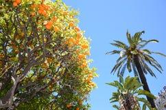 Orangen im schönen jardin Albert, Nizza Stockbilder