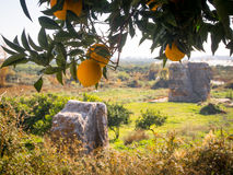 Orangen im Winter Lizenzfreies Stockbild