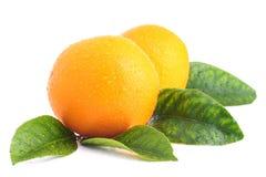 Orangen mit Blättern Lizenzfreies Stockbild