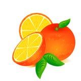 Orangen mit Blättern Lizenzfreie Abbildung