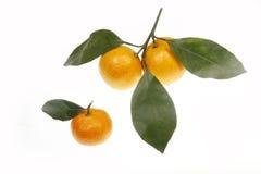 Orangen mit Blättern Stockbilder
