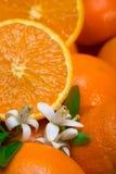 Orangen mit Blättern und Blüte Stockfoto