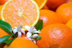 Orangen mit Blättern und Blüte Lizenzfreie Stockbilder