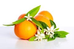 Orangen mit orange Blütenblumen auf Weiß Lizenzfreie Stockfotografie