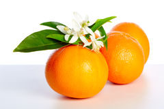 Orangen mit orange Blütenblumen auf Weiß Stockbild