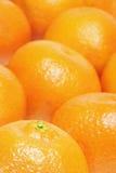 Orangen oder Klementinen Stockfotos