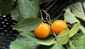 Orangen roh Stockfotografie