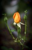 orangen steg Fotografering för Bildbyråer