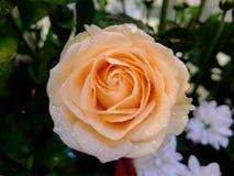 orangen steg royaltyfri fotografi