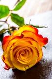 orangen steg steg yellow Flera orange rosor på granitbakgrund Arkivfoto
