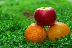Orangen und Apfel auf dem Gras Stockfotografie