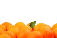 Orangen und Blätter lizenzfreies stockfoto