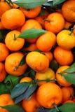 Orangen- und Blathintergrund Lizenzfreies Stockbild