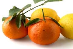 Orangen und Zitronen Stockfotografie