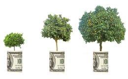 Orangenbäume, die vom Dollarschein wachsen stockfoto