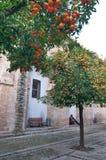 Orangenbäume in Sevilla, Spanien Stockfotografie