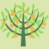 Orangenbaum Lizenzfreie Stockfotos
