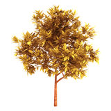 Orangenbaum 3d auf einem weißen Hintergrund Stockfoto