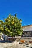 Orangenbaum in einem kleinen Hof Stockbild