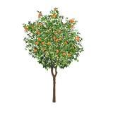 Orangenbaum mit Früchten und Blumen Lizenzfreies Stockfoto