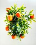 Orangenbaum vorbildliches Apply für Zeigung im restuarang stockfotografie