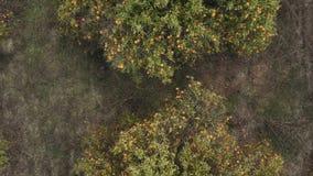 Orangenbaumplantagen in der spanischen Provinz stock footage