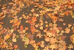 Orangenblätter auf der Erde Stockfoto