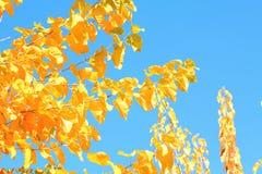 Orangenblätter des blauen Himmels des Herbsthintergrundes Lizenzfreie Stockbilder