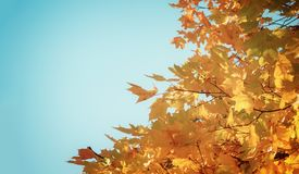 Orangenblätter im Herbstpark Lizenzfreie Stockbilder