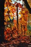 Orangenblätter mit Sonnenstrahlen Stockbild