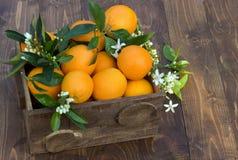 Orangenfrüchte im Kasten Stockfotografie