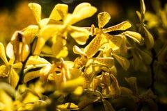 Orangenorchidee schön im Garten, thailändische Orchidee Stockbild