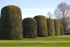 Orangery Hedge Royalty Free Stock Photography