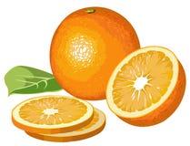 Oranges. Illustration of orange, half and slices Stock Photography