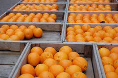 Oranges. In boxes on a market in amsterdam Stock Photos