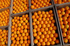 Oranges. A collection of oranges in boxes Stock Image