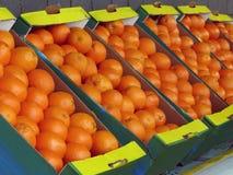 Free Oranges Royalty Free Stock Image - 14100096