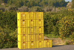 Oranges. A pile of  crates filled with oranges Royalty Free Stock Photos