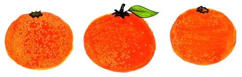 Oranges. A set of three hand painted illustrated oranges stock illustration