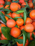Oranges Photos stock