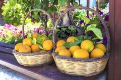 Oranges Image libre de droits