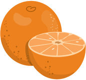 Oranges. Illustration of two oranges Royalty Free Stock Image