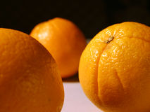 Between oranges. A wiew from among oranges royalty free stock photography