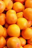 Oranges. Bunch of fresh oranges on the market royalty free stock photo